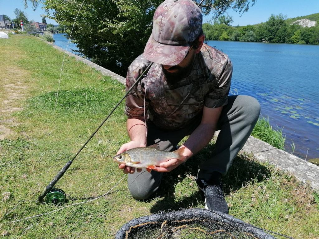 Pêche à la mouche en Seine